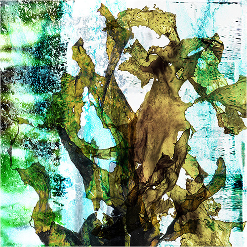 Martine Vanderspuy, Seaweed Sway, mixed media of photography, paint and resin, 90 x 90cm. Fine art paper: $580, Canvas print: $690